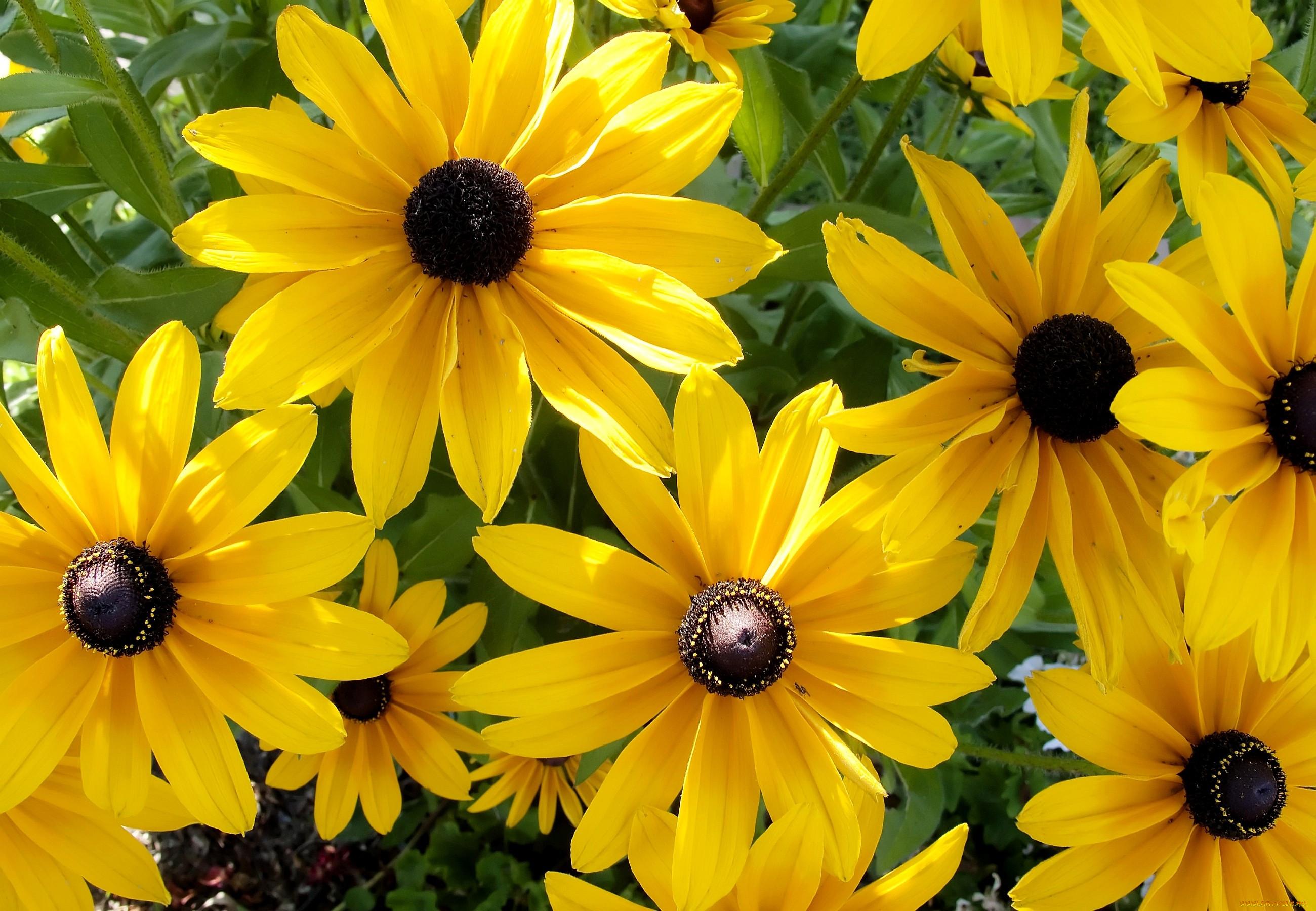 того как желтые садовые цветы картинки кабачков